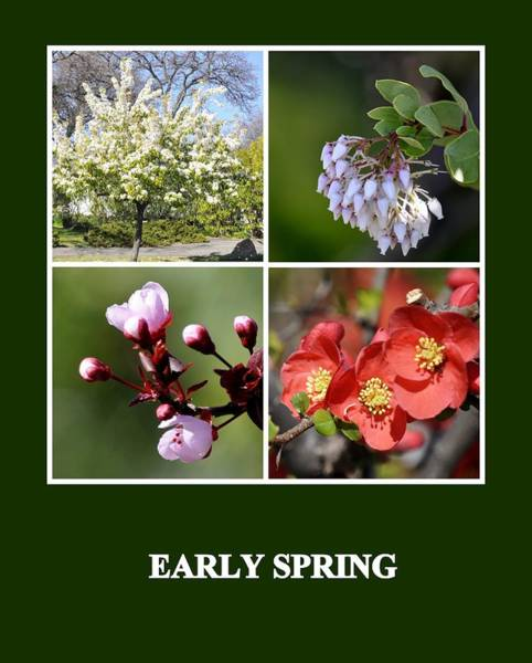 Photograph - Early Spring by AJ  Schibig