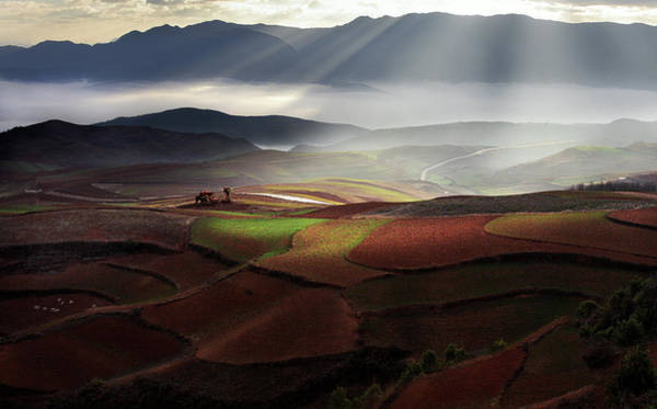 Sunbeam Photograph - Early Spring On Red Land by Bj Yang