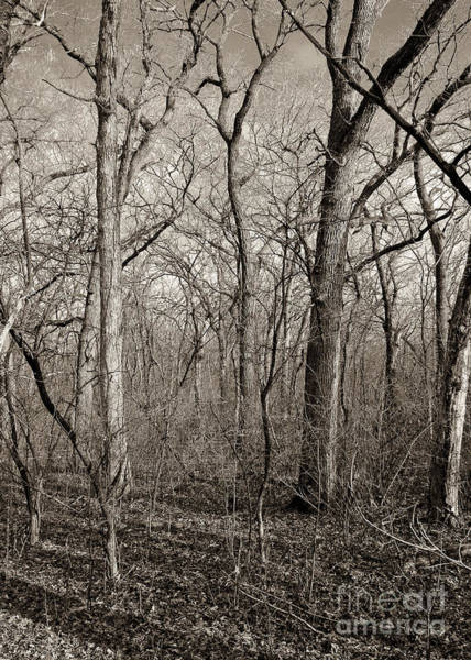 Photograph - Early Spring by Steven Ralser