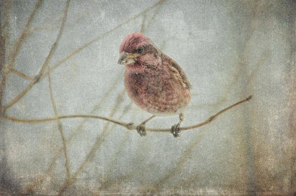 Bird House Photograph - Early Spring Visitor by Susan Capuano