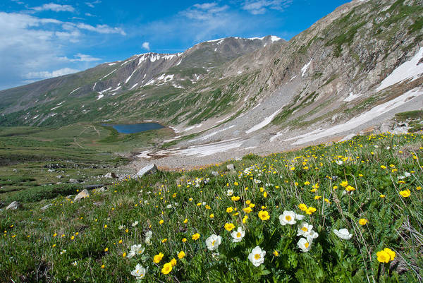 Photograph - Early Summer In The Colorado Rockies by Cascade Colors