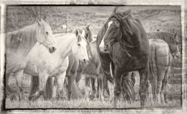 Wall Art - Photograph - Ears Are Back by Alice Gipson