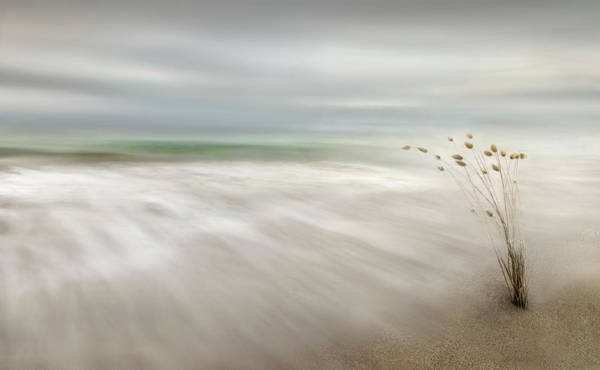 Sea Flowers Wall Art - Photograph - Ears In The Sea by Fran Osuna
