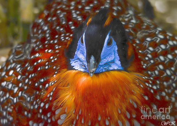 Photograph - Earth Bird by Wanda Krack