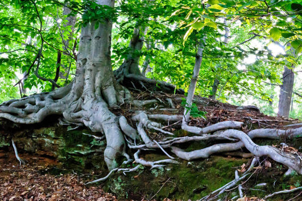 Photograph - Earth Tree And Roots by Louis Dallara
