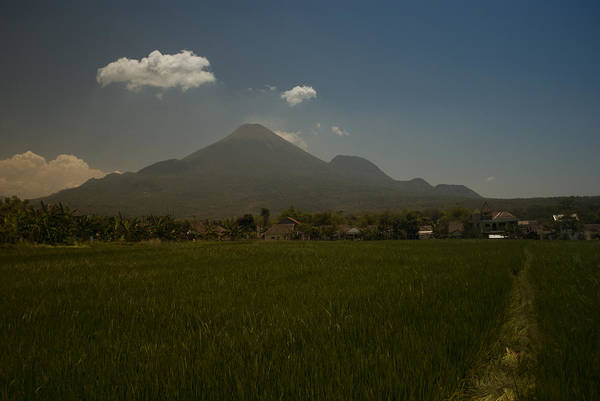 Photograph - Javanese Rice Fields by Miguel Winterpacht