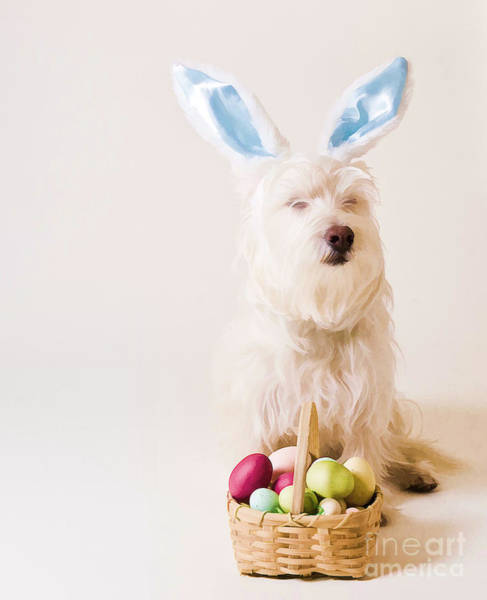 Westie Photograph - Easter Bunny Westie by Edward Fielding