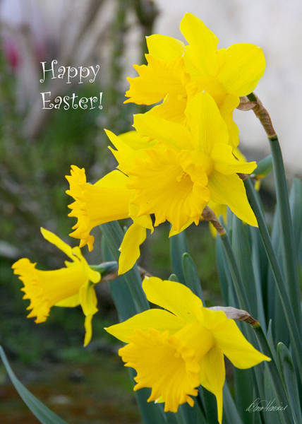 Photograph - Easter Daffodils by Diana Haronis