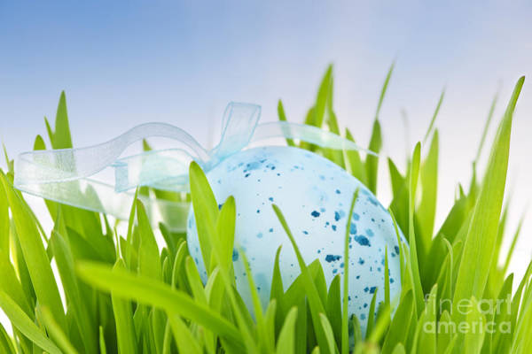 Wall Art - Photograph - Easter Egg In Grass by Elena Elisseeva