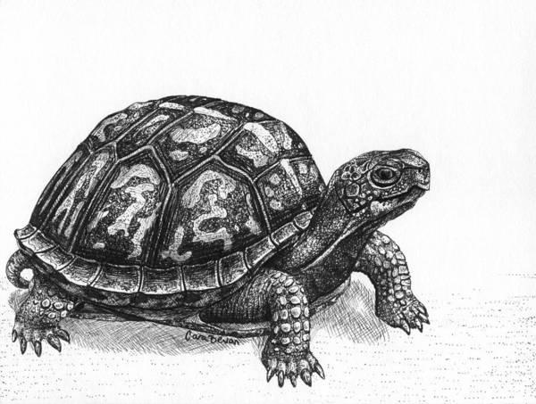 Mat Drawing - Eastern Box Turtle by Cara Bevan
