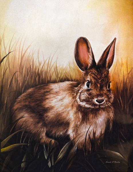 Cottontail Wall Art - Painting - Eastern Cottontail Rabbit by Sandi OReilly