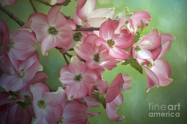 Painting - Eastern Dogwood I by Beve Brown-Clark Photography