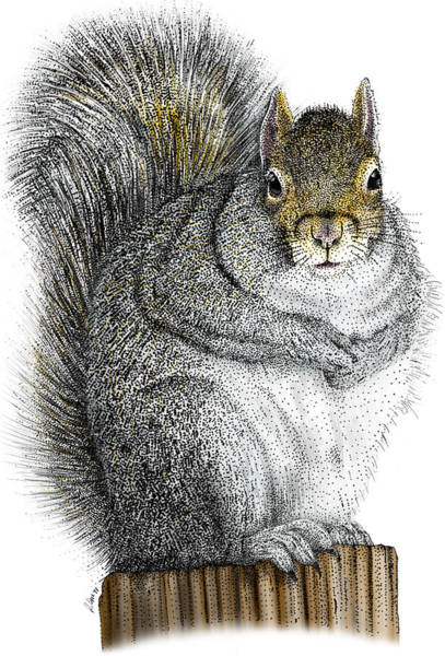Photograph - Eastern Gray Squirrel by Roger Hall