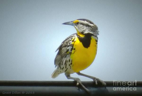 Photograph - Eastern Meadowlark by Grace Dillon