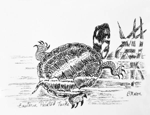 Painted Turtle Drawing - Eastern Painted Turtle by Becky Mason
