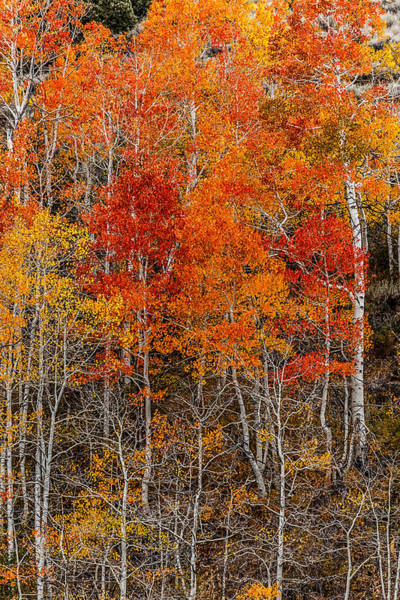 Photograph - Eastern Sierra Fall by Wes and Dotty Weber