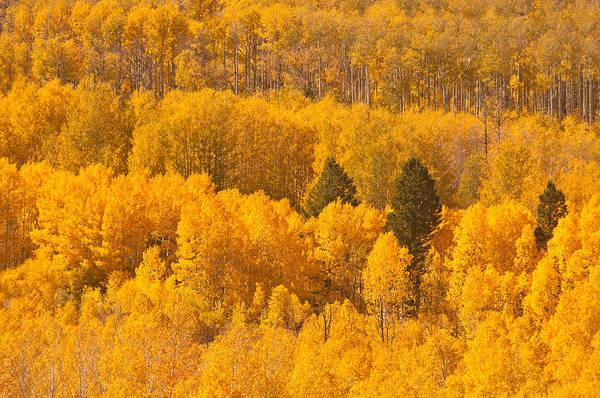 Photograph - Eastern Sierra Fall by Sherri Meyer