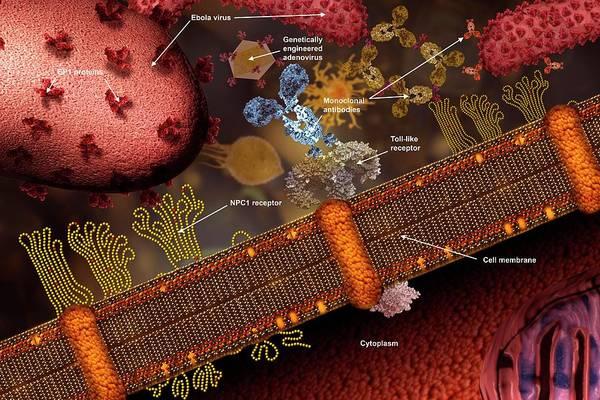 Ebola Vaccine Art Print