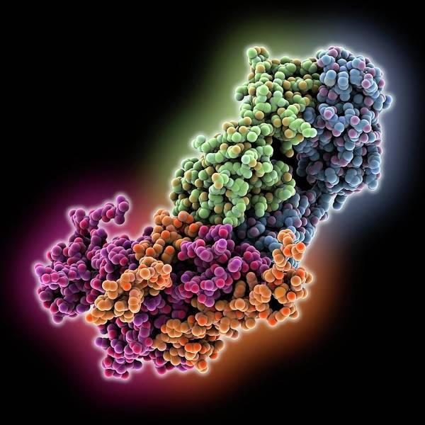 Antibody Wall Art - Photograph - Ebola Virus Glycoprotein And Antibody by Laguna Design