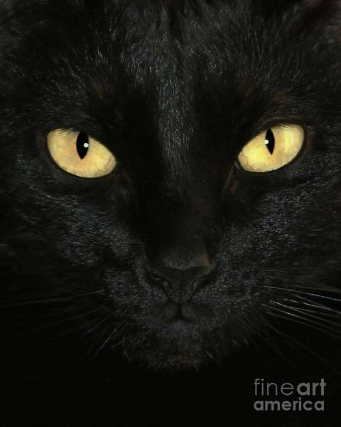 Photograph - Ebony Eyes by Sabrina L Ryan