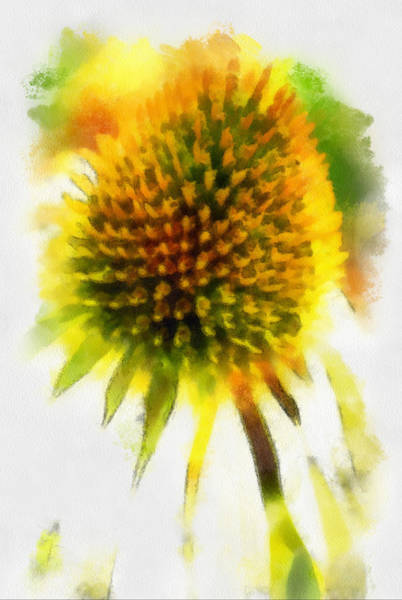 Photograph - Echinacea by Gerry Bates