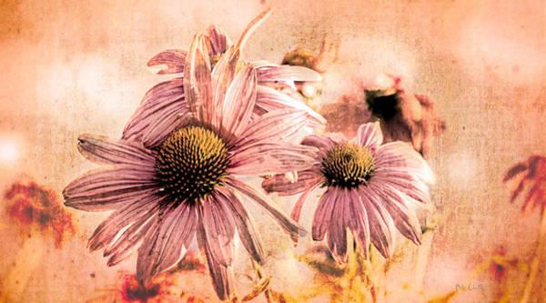 Wall Art - Photograph - Echinacea Impressions  by Bob Orsillo