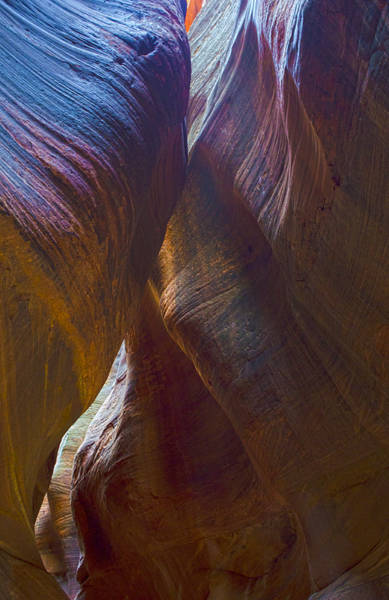 Photograph - Echo Canyon Curves by Loree Johnson
