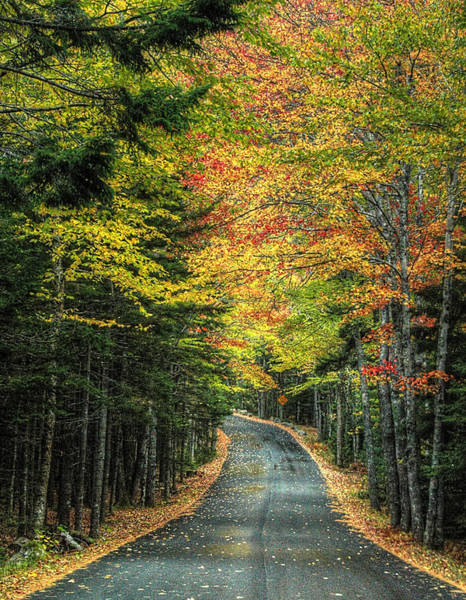 Photograph - Echo Lake Road by Michael Kirk