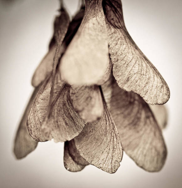 Seed Pods Photograph - Echo by Shane Holsclaw