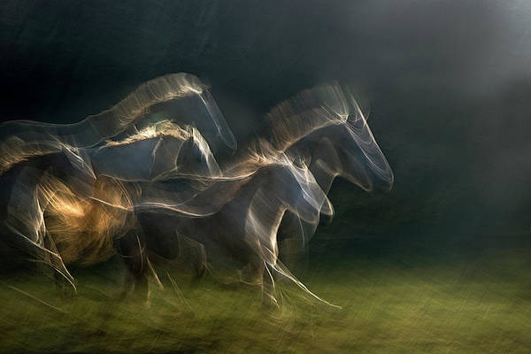 Herd Photograph - Echoing In Motion by Milan Malovrh