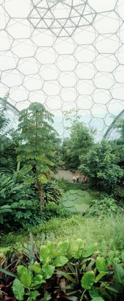 Humid Photograph - Eden Project by Sinclair Stammers/science Photo Library