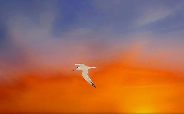 Wildbird Photograph - Edge Of Sunset by Barbara Chichester
