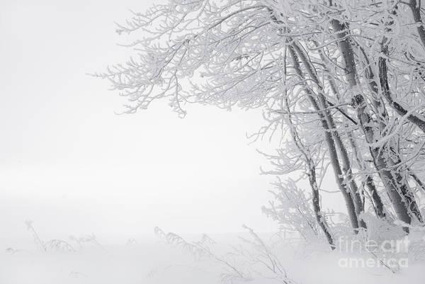 Hoar Photograph - Edge Of Winter by Dan Jurak
