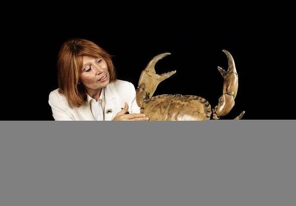 Chela Wall Art - Photograph - Edible Crab by Science Photo Library