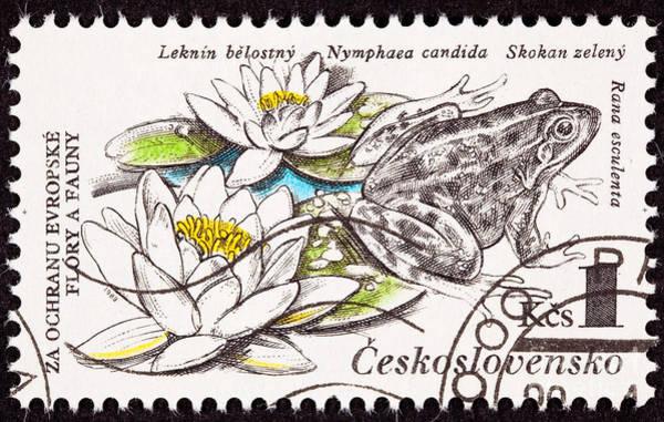 Czechoslovakian Photograph - Edible Frog Pelophylax Esculentus by Jim Pruitt