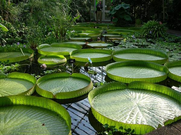 Photograph - Edinburgh Royal Botanic Garden  by Keith Stokes