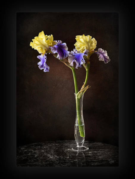 Photograph - Edith Wollford Iris In Vase by Endre Balogh
