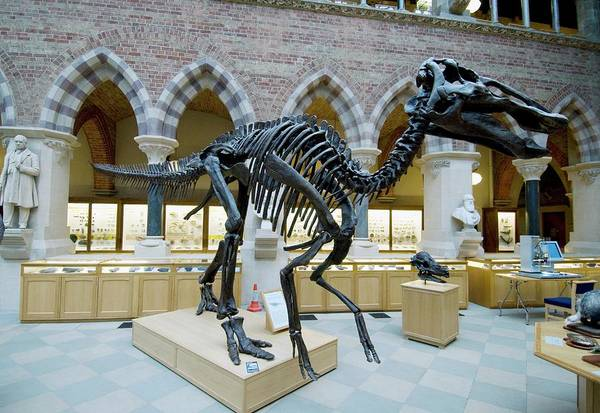 Wall Art - Photograph - Edmontosaurus Skeleton by Sinclair Stammers/science Photo Library