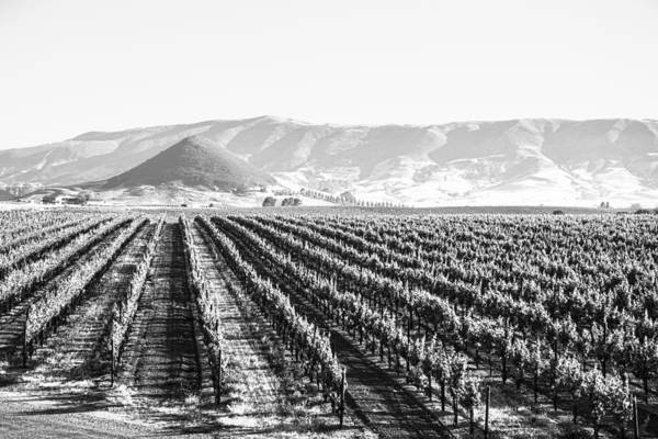 Photograph - Edna Valley Vineyard In Black And White by Priya Ghose