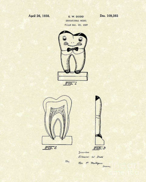 Model Drawing - Educational Tooth 1938 Patent Art by Prior Art Design