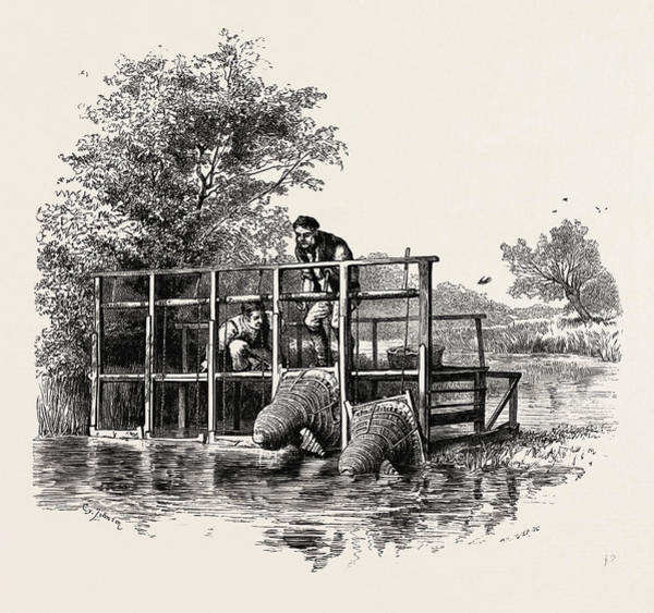 Buck Drawing - Eel Bucks On The Thames, Uk, Britain, British by English School