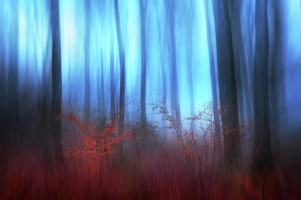 Woods Photograph - Eerie Woods by Gustav Davidsson