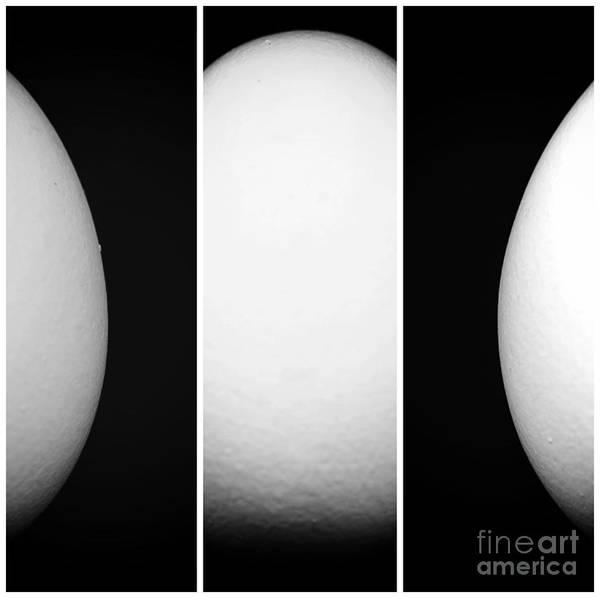 Photograph - Egg Panels by John Rizzuto