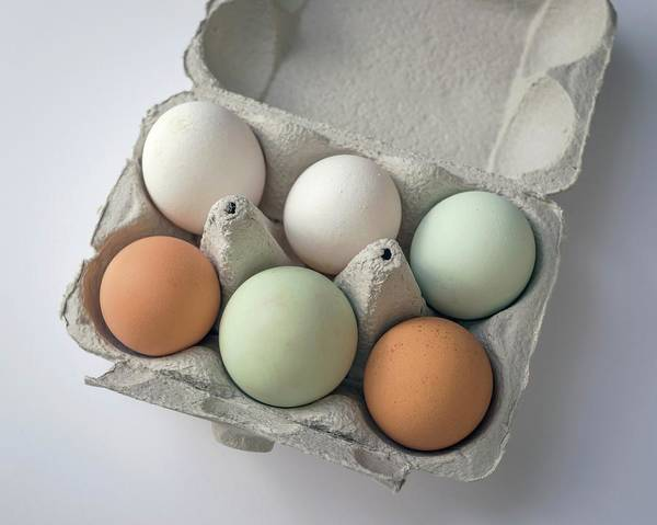 Birds Eggs Photograph - Egg Pigmentation by Robert Brook