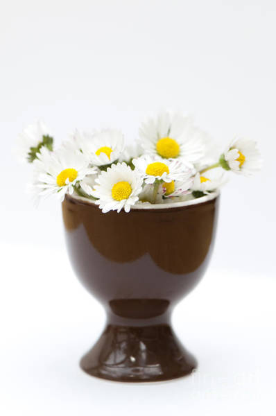 Egg Cup Photograph - Eggcup Daisies by Anne Gilbert