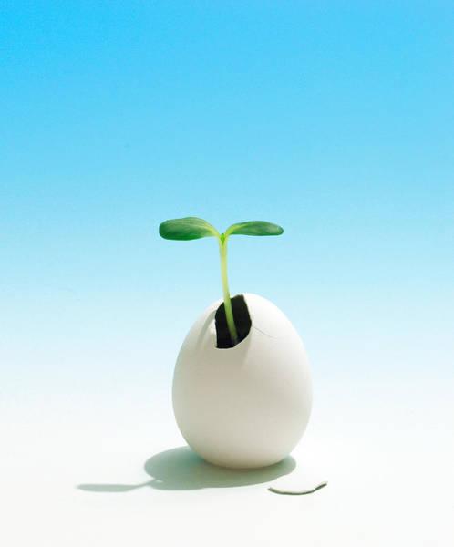 Furon Photograph - Eggplant by Daniel Furon
