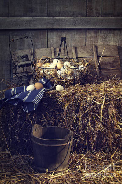 Photograph - Eggs In Wire Basket On Hay In Barn by Sandra Cunningham