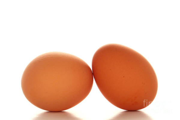 Free Range Photograph - Eggs by Olivier Le Queinec