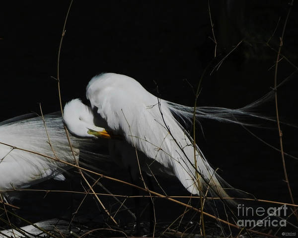 Egret Bird City At Avery Island Louisiana Art Print