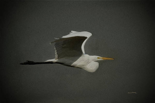 Wall Art - Digital Art - Egret Fly By 2 by Ernie Echols